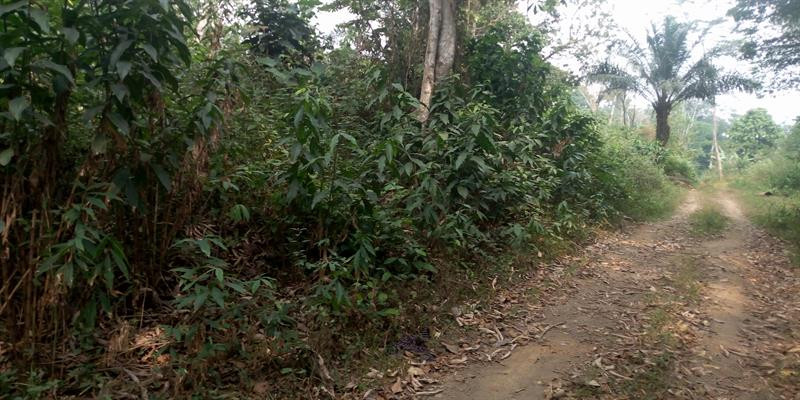 Terrains ГЂ Vendre YaoundГ© Nsimalen 3 Hectares