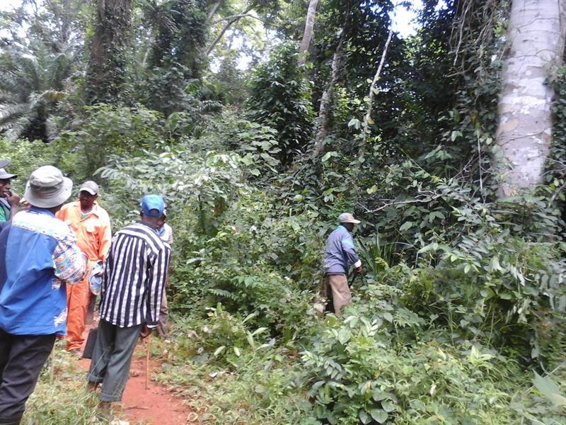 500 Hectares De Terrain Agricole ГЂ Louer ГЂ Mengang / Cameroun