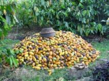 Terrain Agricole A Vendre A Nkoteng,, Yaoundé, Cameroon Real Estate