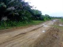 Terrain Titré A Vendre,, Kribi, Cameroon Real Estate