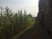 Terrain À Vendre Titré,, Yaoundé, Cameroon Real Estate