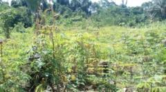 Terrain Titré À Vendre,, Kribi, Cameroon Real Estate