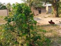 Terrain Titré Et Sec À Vendre,, Douala, Cameroon Real Estate