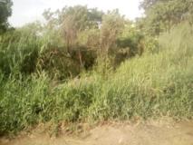 Land Douala