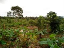 Vente Terrain 2 Hectares A Bomono, Dibombari,, Douala, Cameroon Real Estate