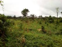Land 10 Hectares On Sale At Idinau, Limbe,, Limbé, Cameroon Real Estate