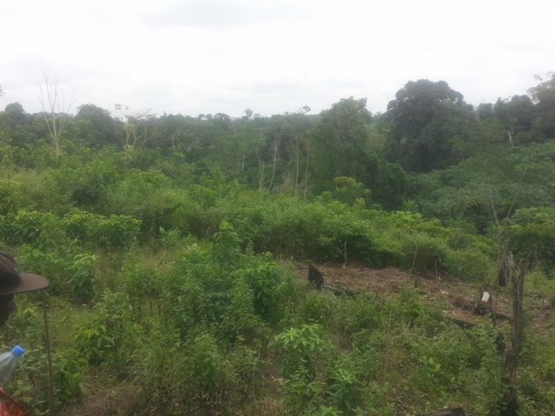Terrain Agricoles 20 Hectares a Dibamba MICHAEL REAL ESTATES AGENCY
